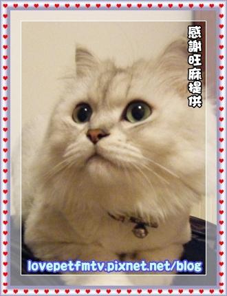 1.寵物手繪更新.JPG