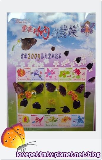 紫斑蝶7更新.jpg