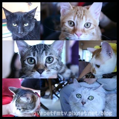 8.貓聚的貓咪們.jpg