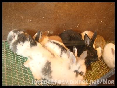 7.兔兔.JPG