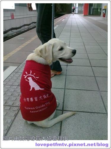 04.導盲犬-Victor1.jpg