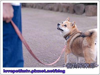 5 不太喜歡散步(網誌用).jpg