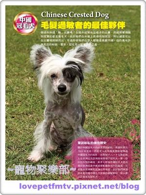 25.中國冠毛(網誌用).jpg