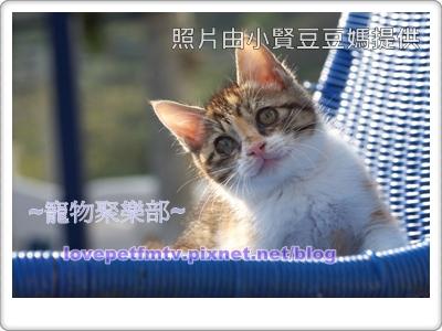 01.吸引貓咪注意免得他跳開(網誌用).jpg