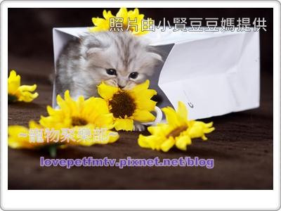 03.給他表演空間不刻意逗他(網誌用).jpg