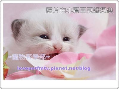 拍攝秘訣-學貓叫(網誌用).jpg