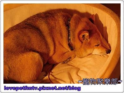 6 晚安(網誌用).jpg