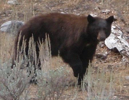 Oct182008 Bear