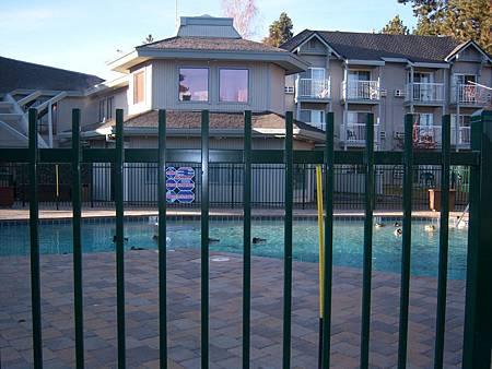 Dec042011 綠頭鴨 Mallard in the pool