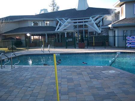 Dec042011 綠頭鴨 Mallard in the pool _2