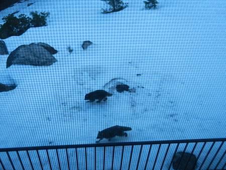 Feb252012 浣熊勘查地形