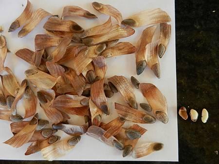 Sep102012 pine nuts