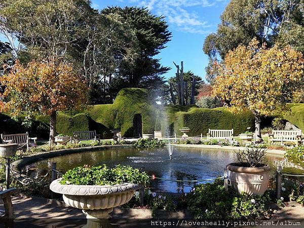 澳洲旅遊墨爾本景點推薦-迷宮花園&薰衣草花園Ashcombe Maze Lavender