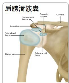 Shoulder joint 04