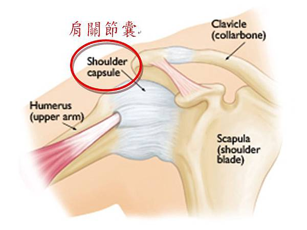 Shoulder joint 01