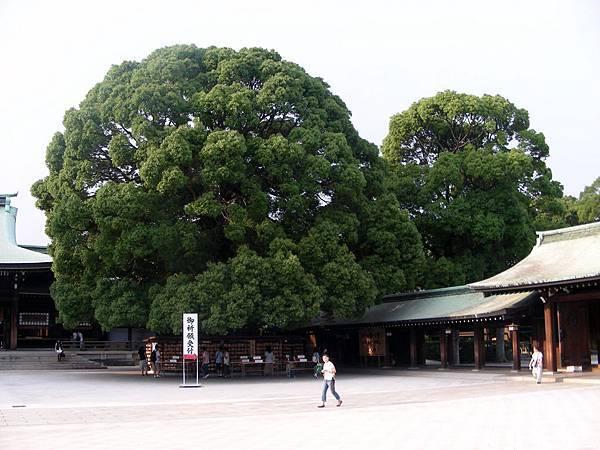 明治神宮 (29).JPG