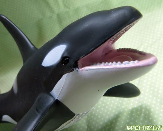 虎鯨 (5)