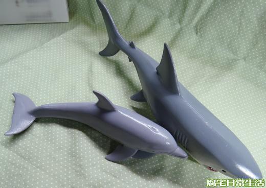 海洋生物 (34)