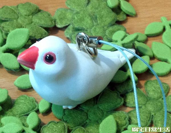 文鳥 (5)