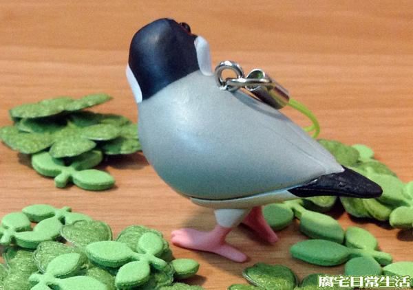 文鳥 (24)