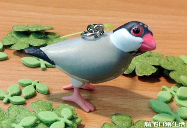 文鳥 (25)