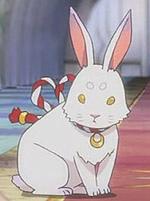 兔子好可愛
