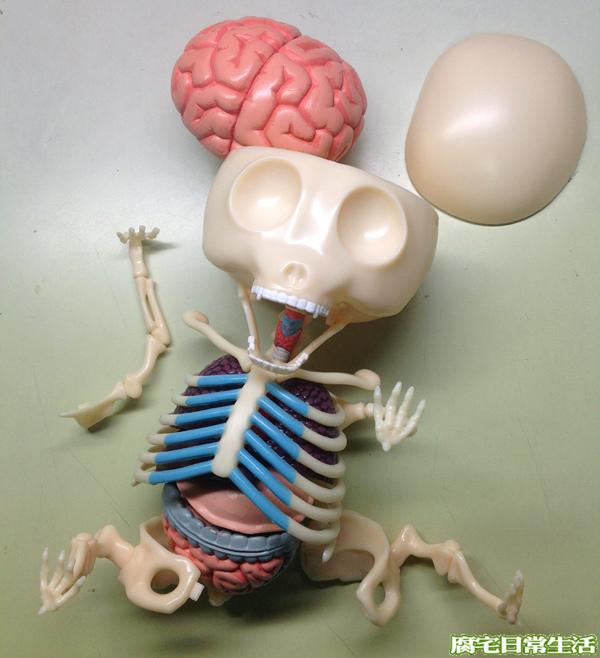 解剖小熊軟糖-gJason Freeny-ummy bear anatomy