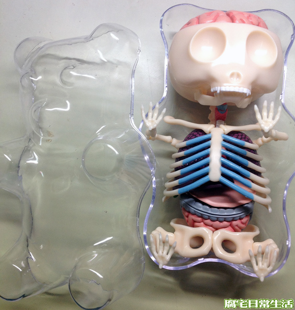 gummy bear anatomy (23)