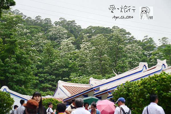 P1190814-1.jpg