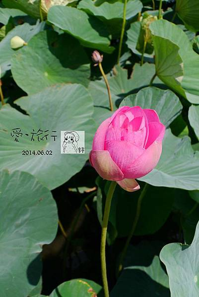 P1200662-1.jpg