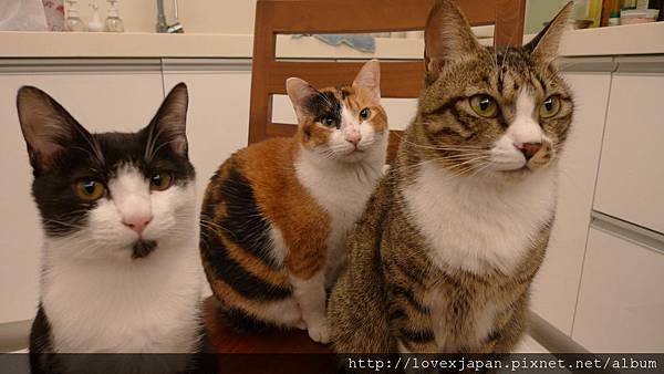 親愛三姊弟