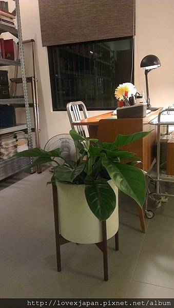 modernica植物盆