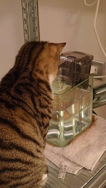 多多的魚缸飲水器