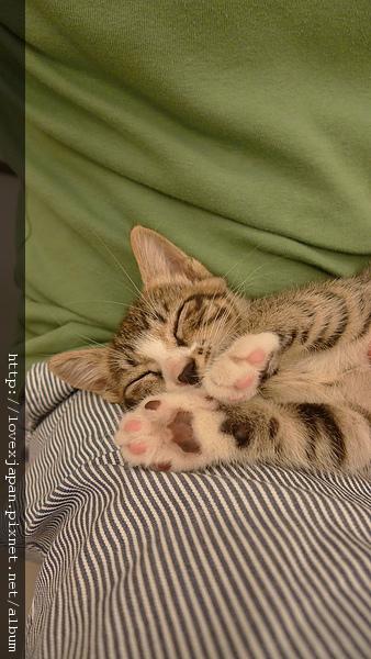 還是睡著比較可愛