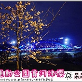 陽光運動園區賞河津櫻