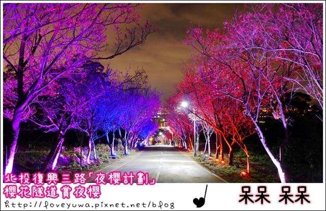 櫻花隧道夜櫻