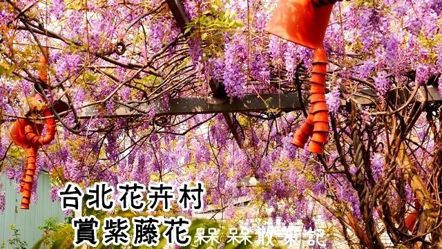 台北花卉村賞紫藤花