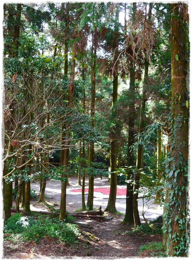 陽明山黑森林