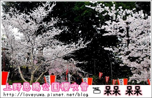 上野恩賜公園櫻吹雪