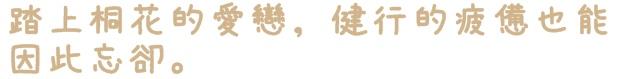 土城桐花公園承天禪寺賞桐花