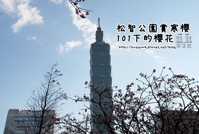 101下櫻花樹松智路賞寒櫻