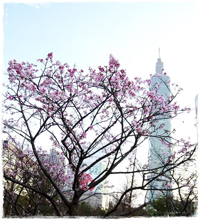 台北101賞櫻