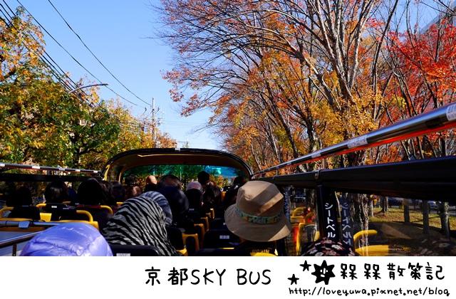 京都期間限定SKY BUS賞楓