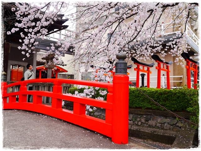 六孫王神社 櫻花