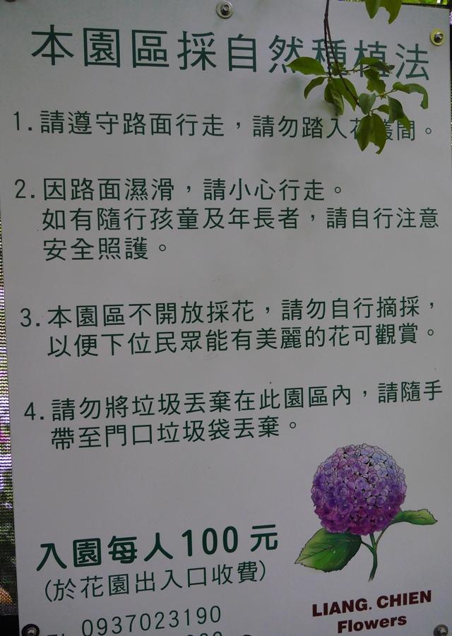 陽明山竹子湖高家繡球花田