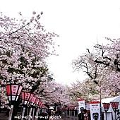 靜岡三島市三嶋大社 對不起青春拍攝場景
