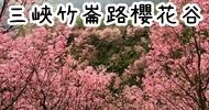三峽竹崙路櫻花谷
