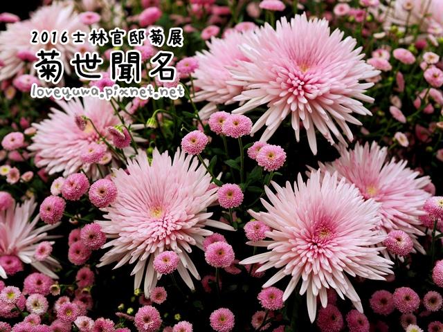 2016士林官邸菊展「菊世聞名」