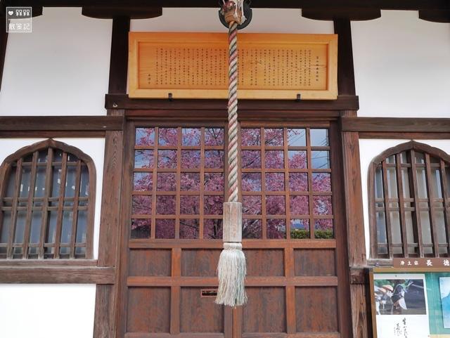長德寺阿龜櫻