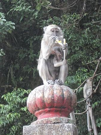馬來西亞吉隆坡-印度教聖地黑風洞-0_13.JPG